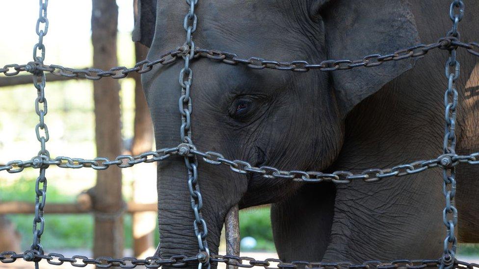 Elefante en centro de conservación
