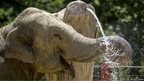 A elephant wets its trunk under a fountain on a hot day
