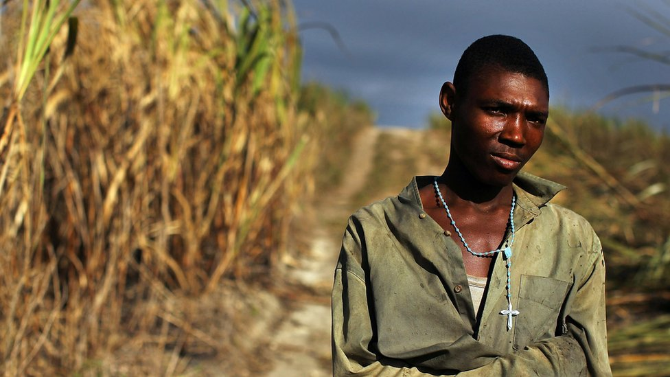 Dominican Republic is a major Caribbean producer of sugarcane