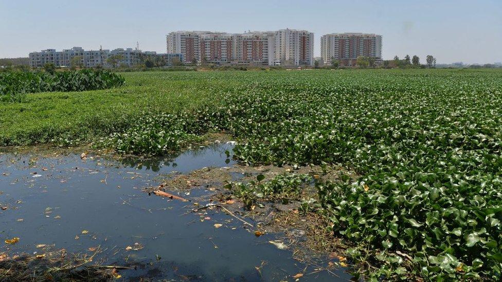 Lago contaminado en Bangalore