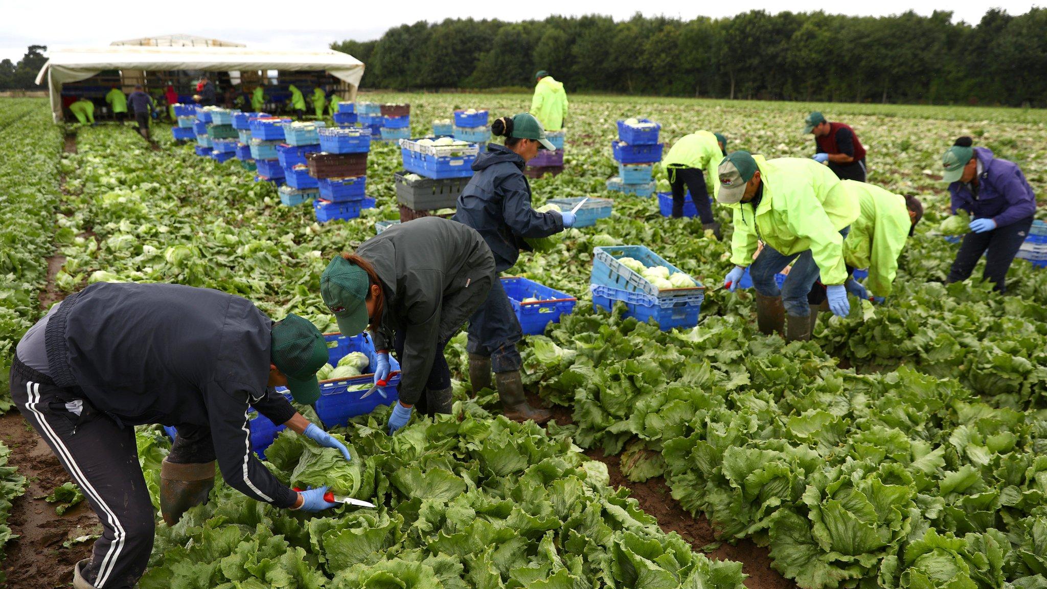 Food industry warns of Brexit workforce shortage