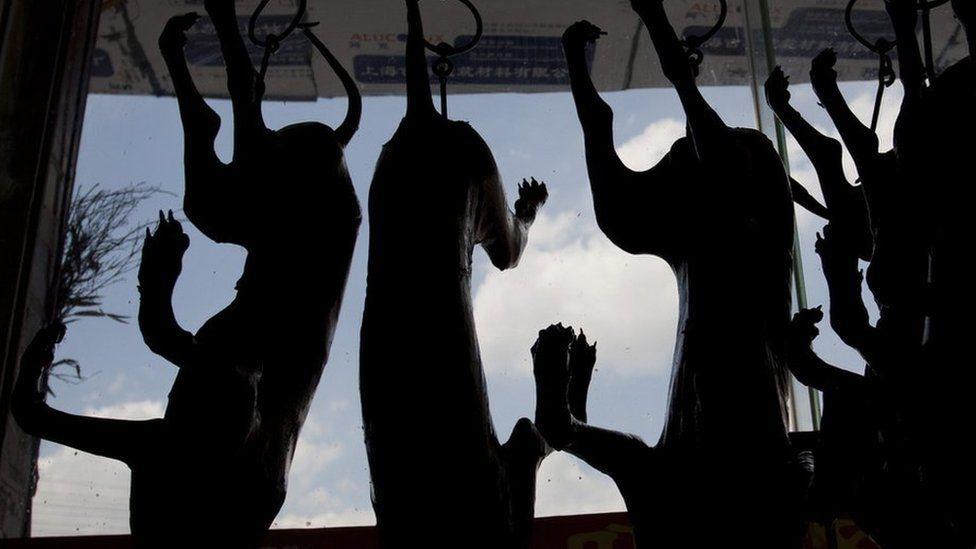 مهرجان لحوم الكلاب ينطلق في الصين رغم شائعات حظره