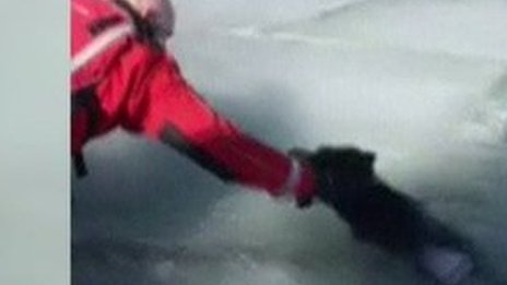 Dramatic rescue of dog trapped in ice in US state of Utah