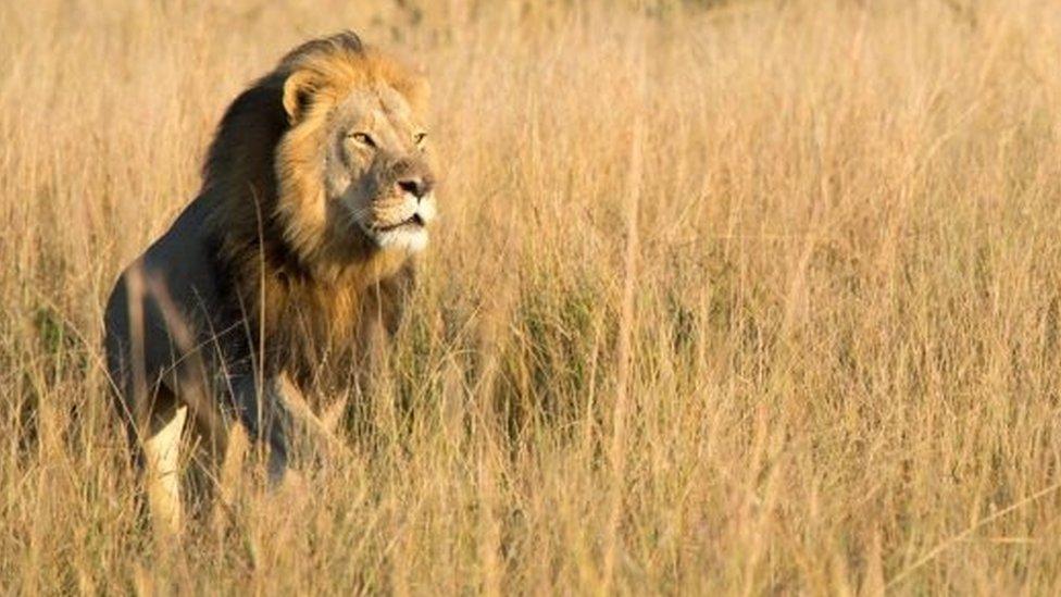 У Зімбабве мисливець застрелив