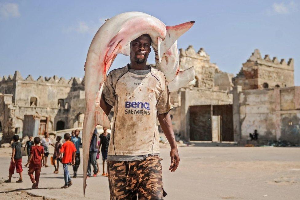 صياد صومالي يحمل، الجمعة، سمكة قرش أبو مطرقة اصطادها قبل أن يتوجه إلى سوق السمك قرب ميناء في العاصمة مقديشيو.