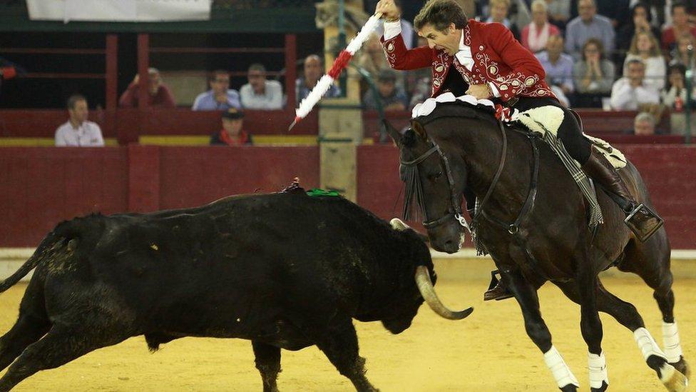 Man vs bull