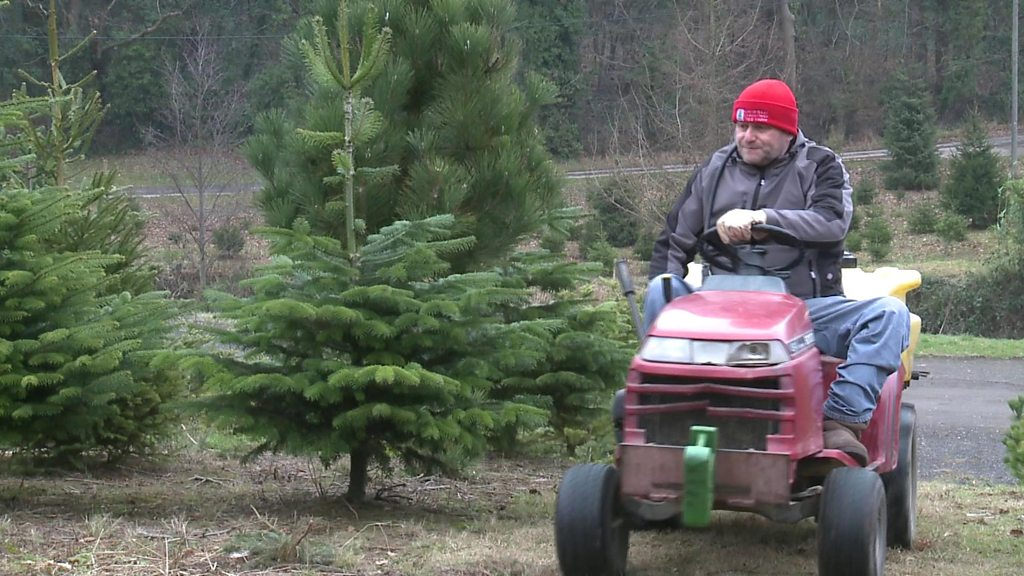 Branching out to grow Christmas trees, despite my accident