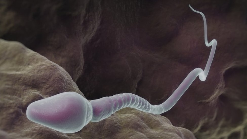 Simulación de un espermatozoide humano