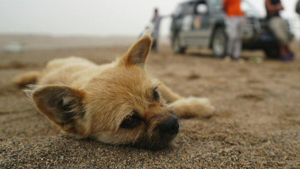 Ultra marathon runner's reunion with stray dog