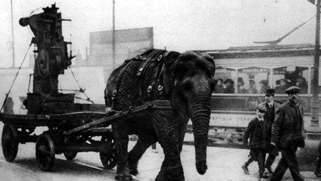 Lizzie the Elephant