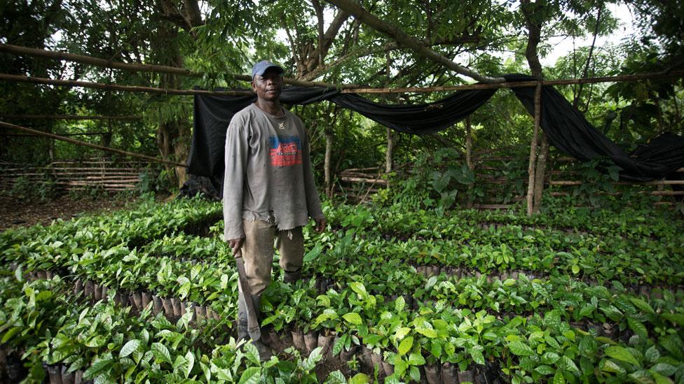 Un productor de granos de café en Ghana