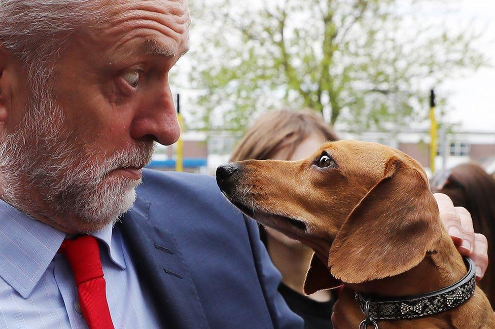 El líder del partido laborista Jeremy Corbyn mira a un perro durante un evento realizado en el Hospital James Paget en la ciudad de Great Yarmouth, Reino Unido.