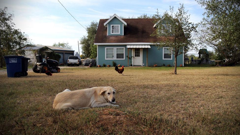 En la casa de los Holcombe, que estaban en la iglesia cuando ocurrió el ataque, los perros siguen esperando a sus dueños.