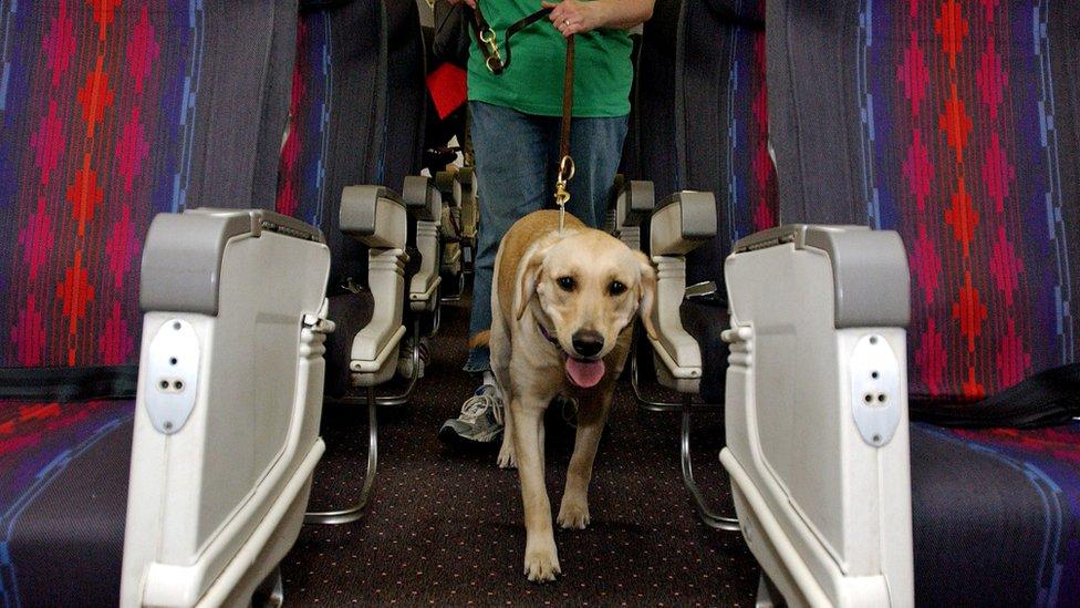 Los perros guía son considerados animales de servicio, y prácticamente no tienen restricciones para ir en aviones.