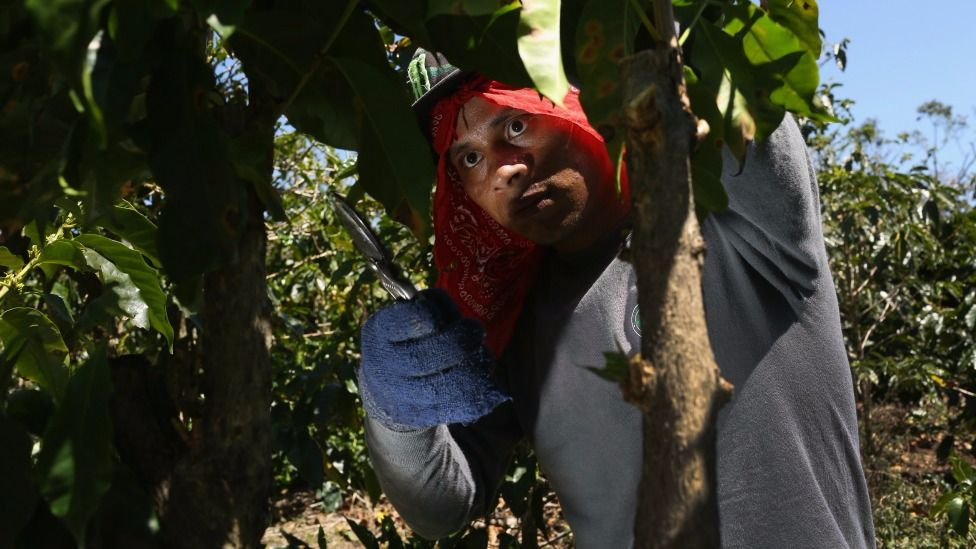 En el pasado la economía de Costa Rica tenía un alto componente agrícola.