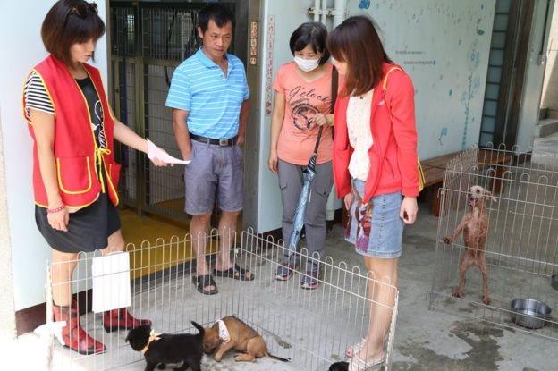 Personas ven perros en una jaula