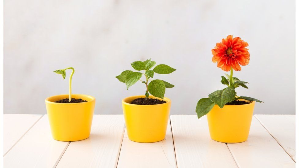 Як квіти завоювали світ