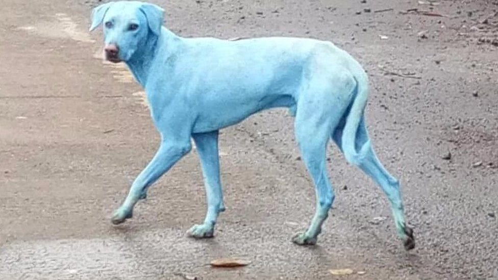 Mumbai's blue dogs