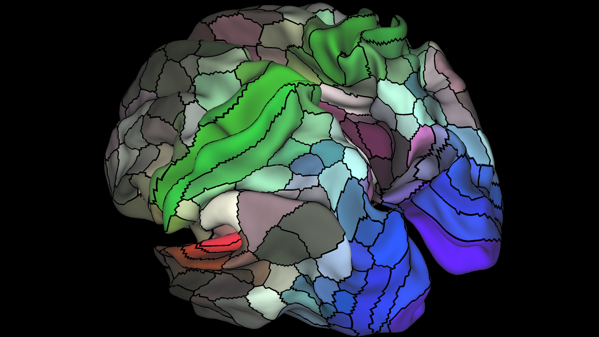 Brain map carves cortex into twice as many areas