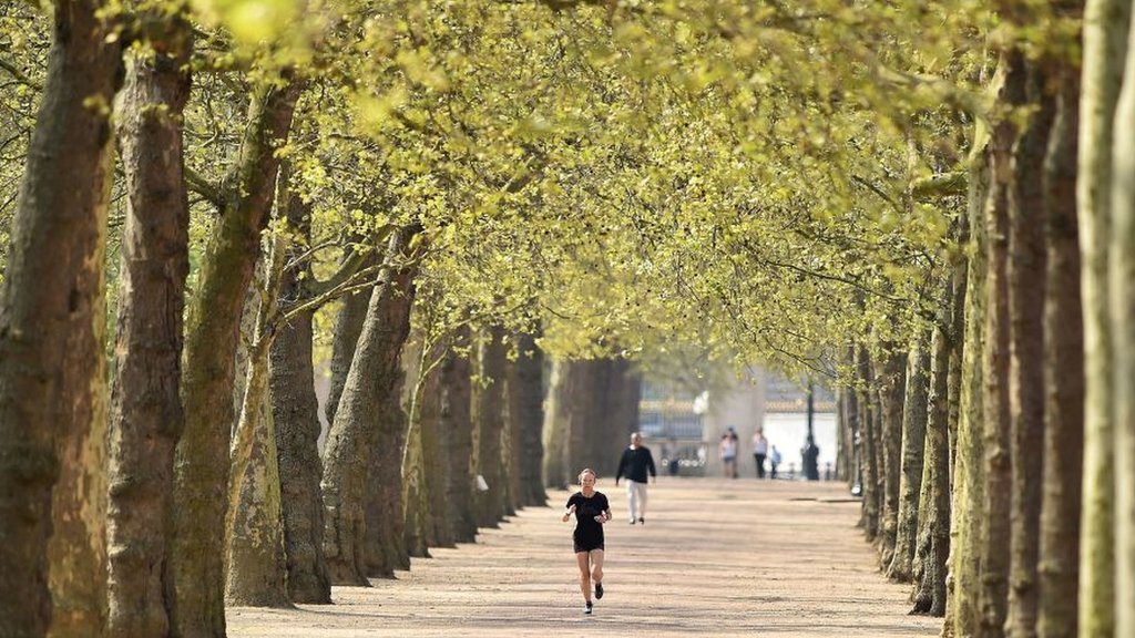 Why do towns and cities have more trees than the countryside? - CBBC Newsround