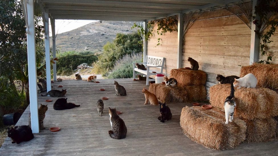 Fancy Greek island life? Cat care into the bargain