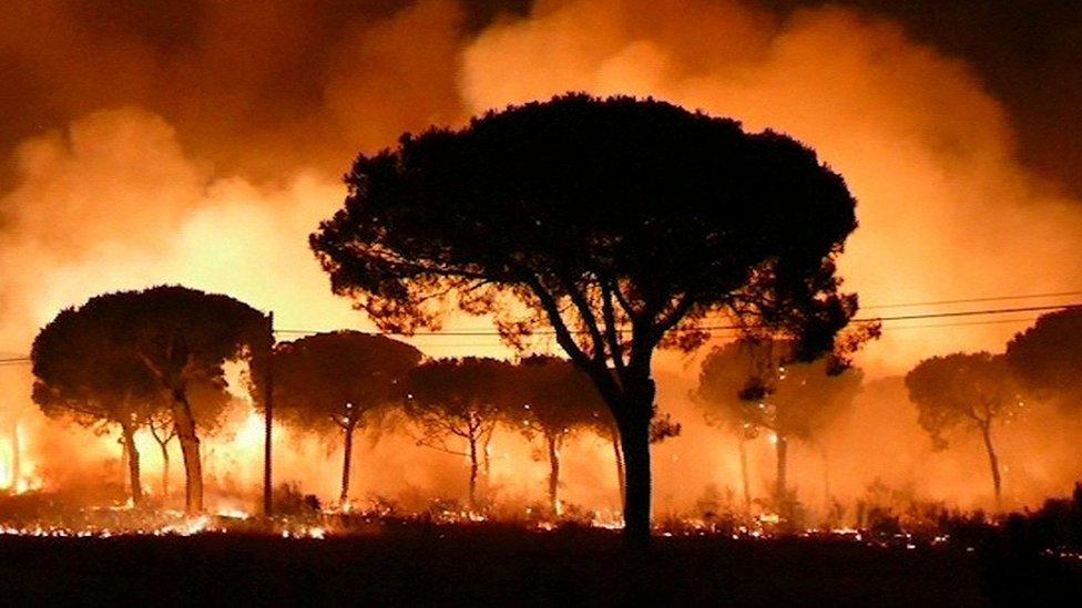 Spain wildfires threaten Doñana nature reserve