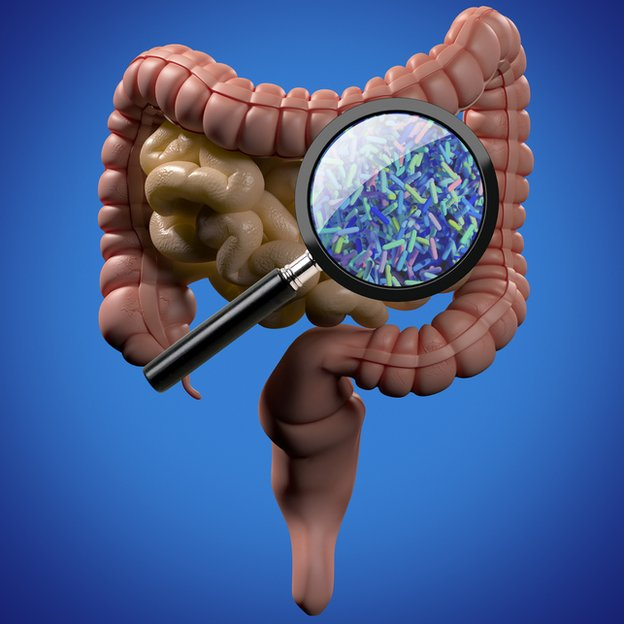 Intestinos lupa y bacterias