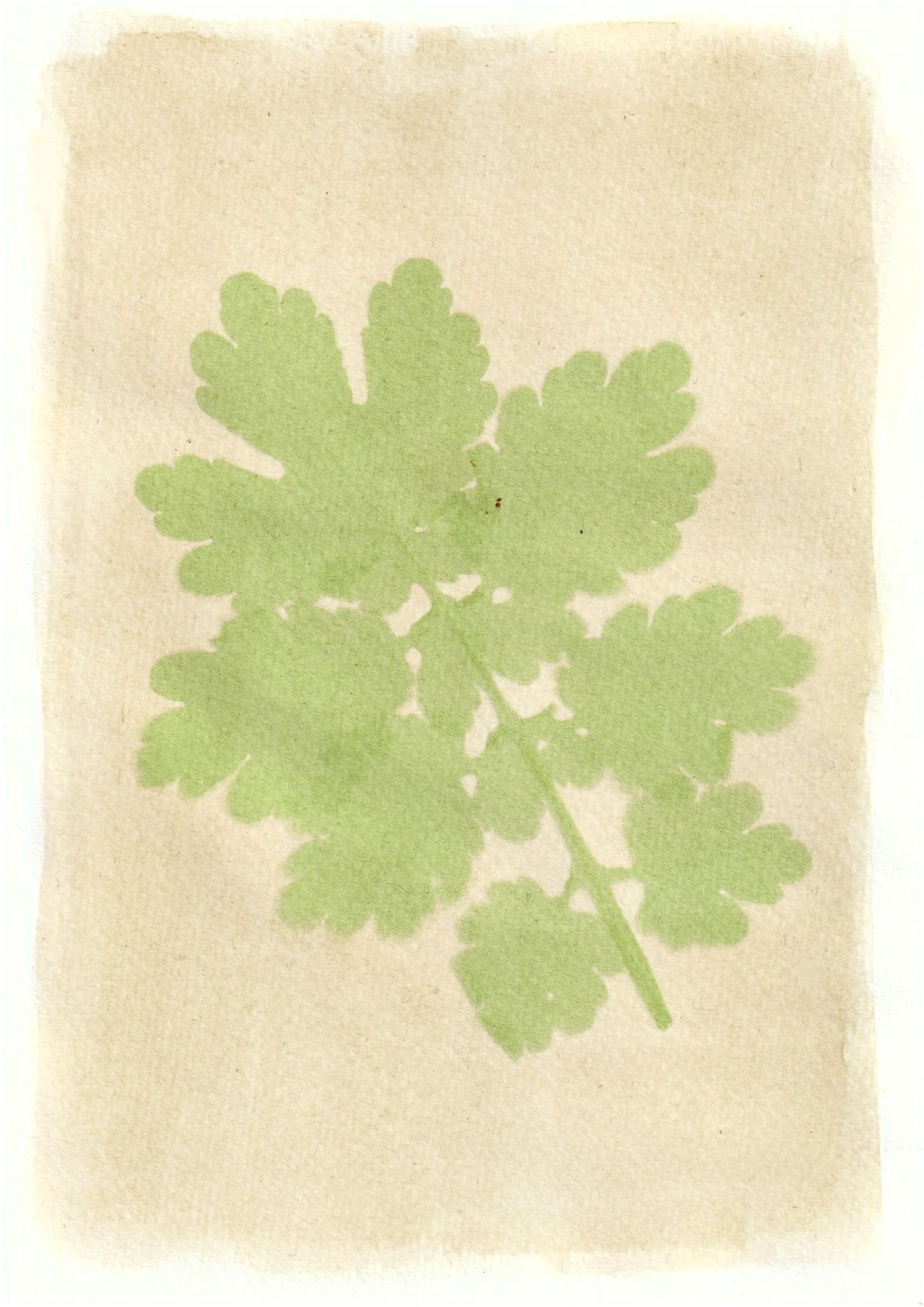 An anthotype print of a large green leaf