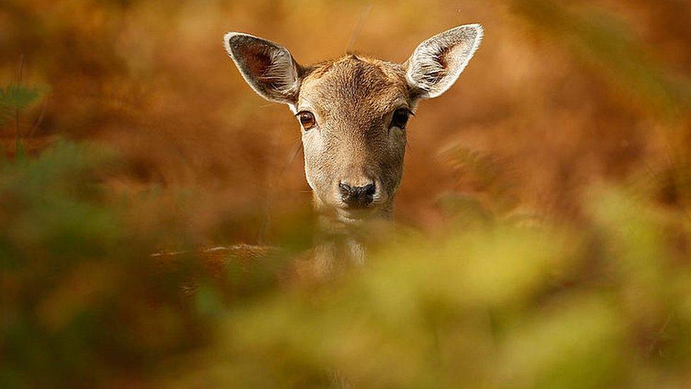 Haldon Forest 10K runner flattened by deer