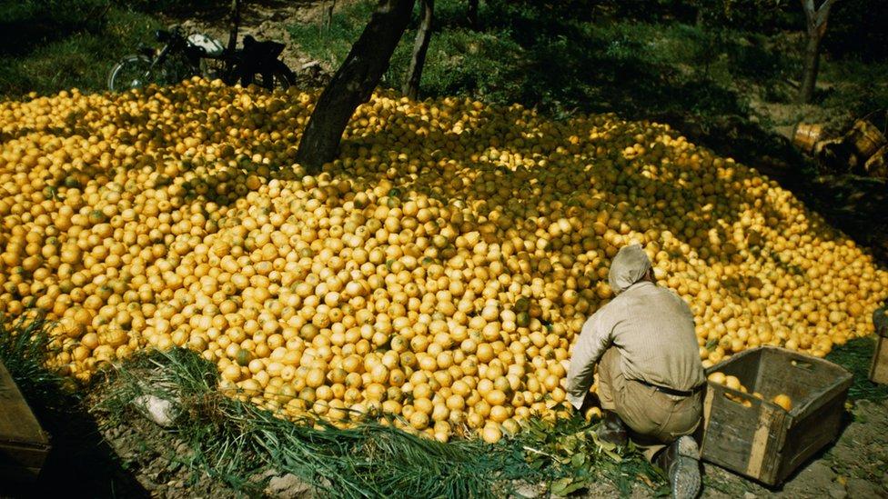 Argentina es uno de los grandes productores mundiales de limones.