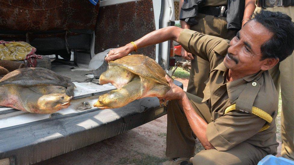 আন্তর্জাতিক বন্যপ্রাণী সংস্থার অনুসন্ধান: বিশ্বজুড়ে কাছিম ও কচ্ছপ পাচারের অন্যতম প্রধান কেন্দ্র ঢাকা