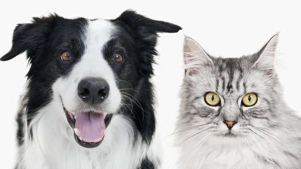 Pet insurance payouts hit record of £785m
