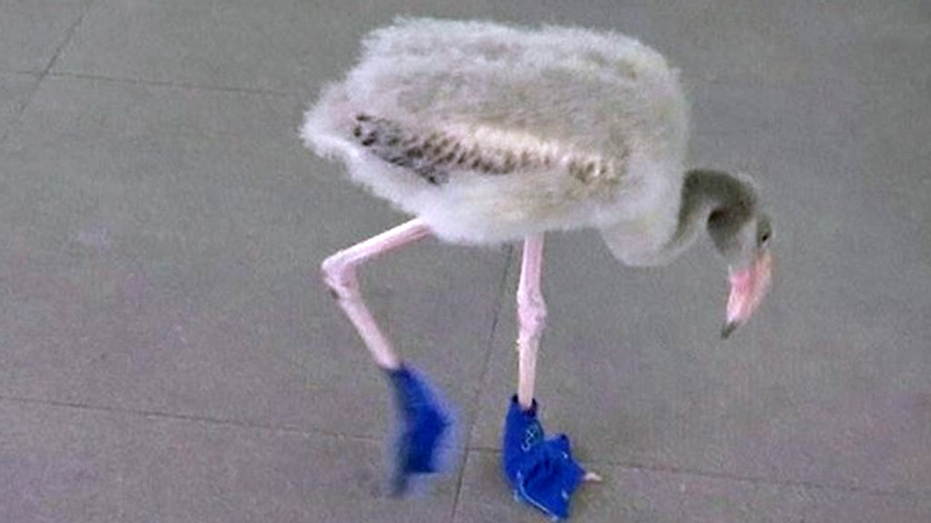 Blue boots for baby flamingo Squish in Singapore