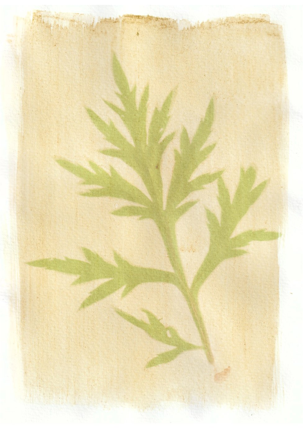An anthotype print of a green piece of plant foliage