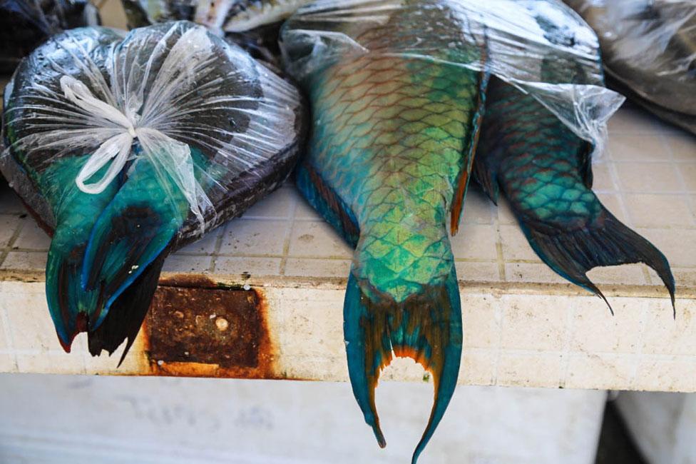 Colourful fish at fish market