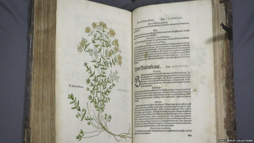 Plants with a hidden history