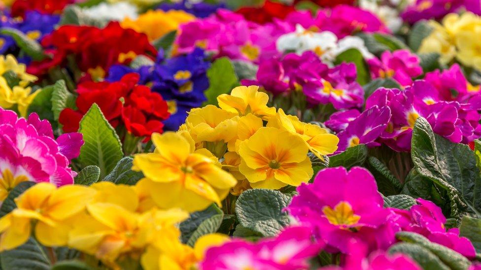 أزهار