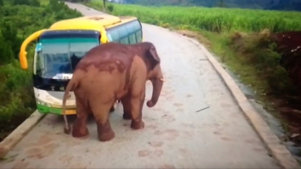 Wild elephant attacks a bus