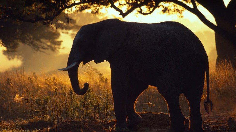 Động vật hoang dã thế giới 'giảm 58% từ 1970'