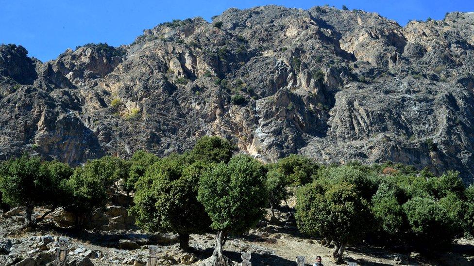 چترال میں پہلی مرتبہ خواتین کے لیے جنگلات کی رائلٹی