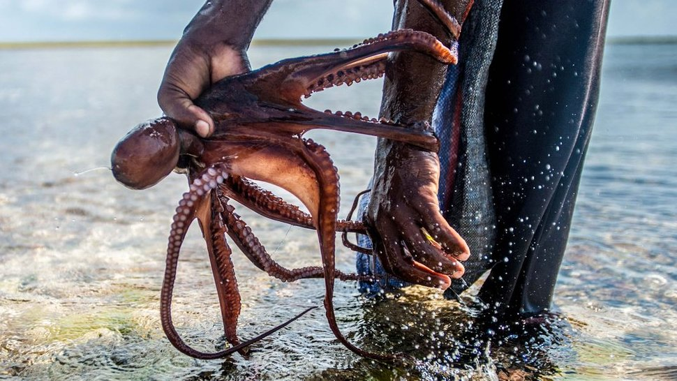 Octopus hunters