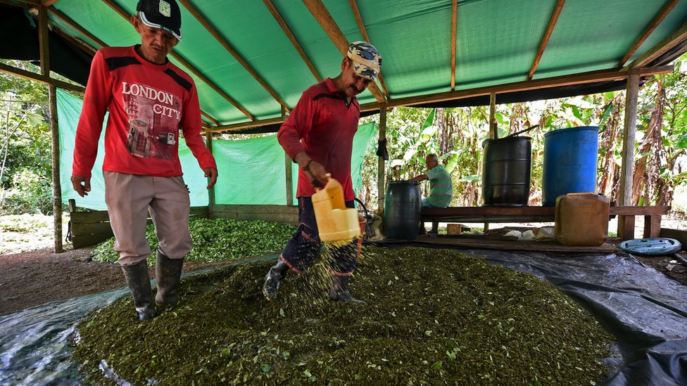 Colombia cocaine production acreage at 'record level'