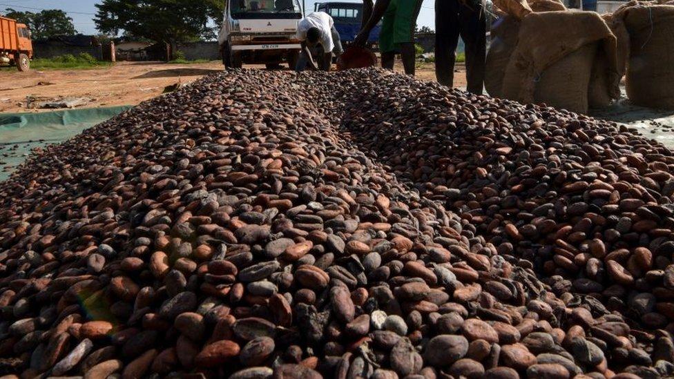Los precios del cacao experimentaron una disminución desde 1980.