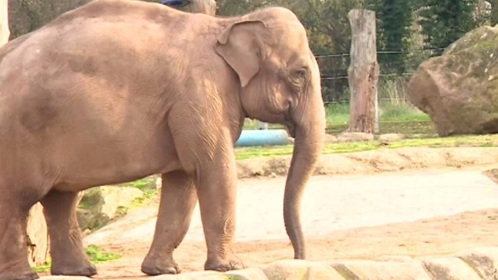 Elephants on the move, to new £2.5m home