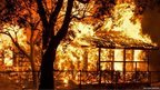 Flames from a wildfire engulf a house and tree