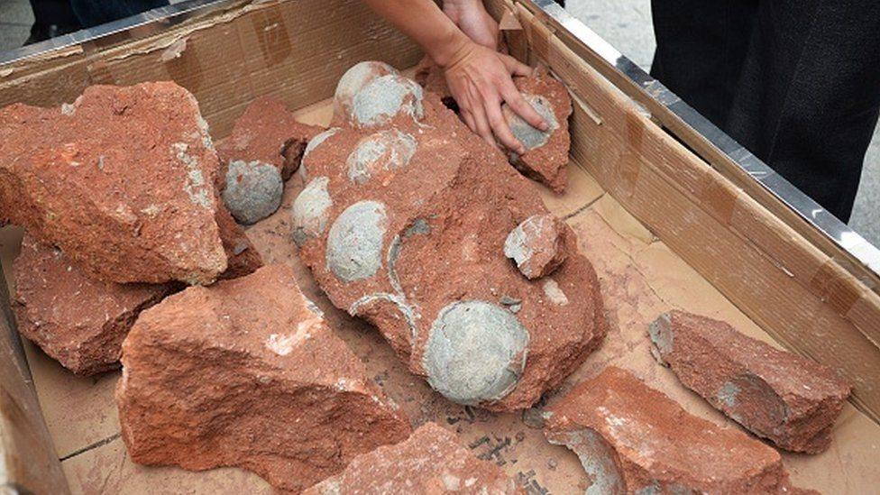 Cina, dinosaurus, fosil