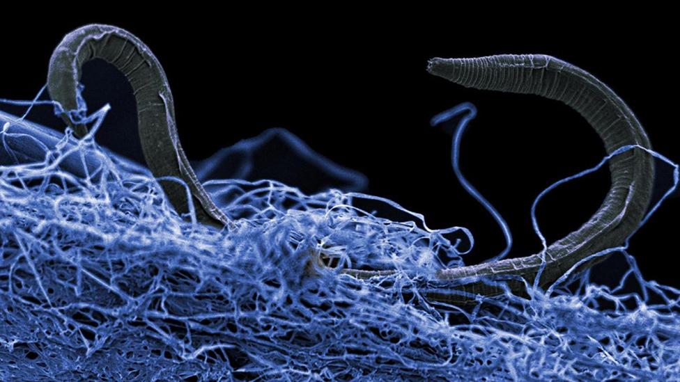 Amount of deep life on Earth quantified