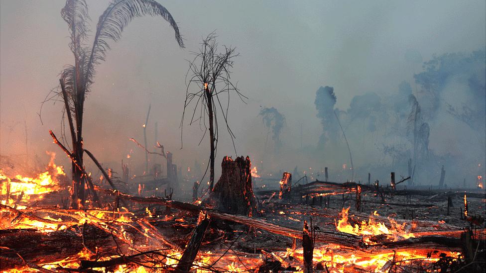 Orman yangınları: 2019 dünyanın gördüğü en kötü yıl mı oldu? - BBC News  Türkçe