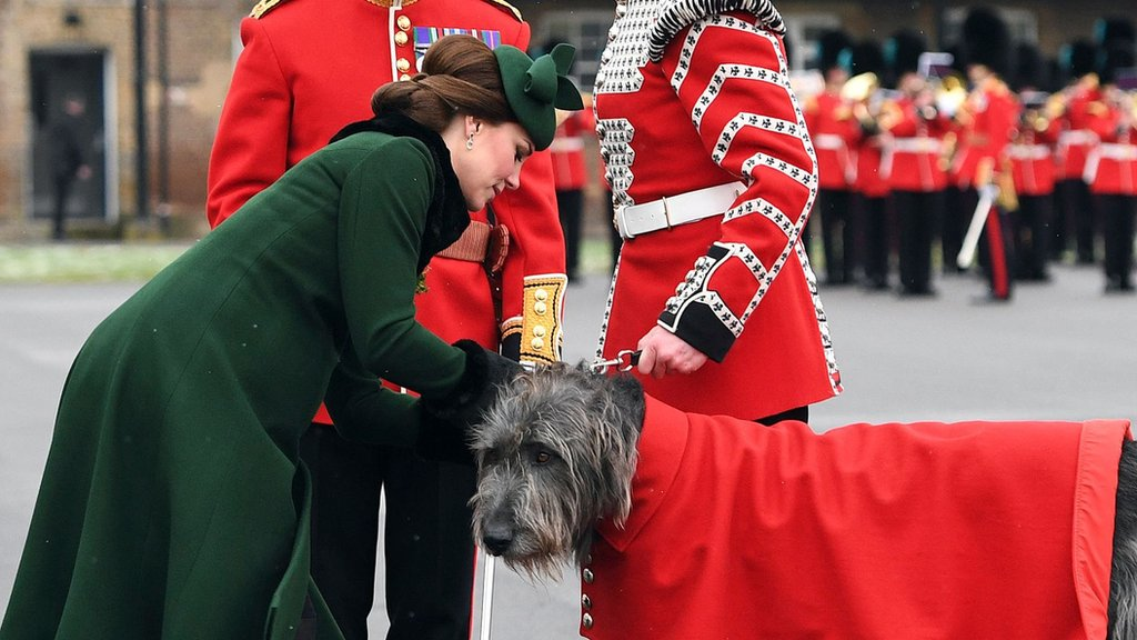 Duchess meets wolfhound - and other St Patrick's Day celebrations