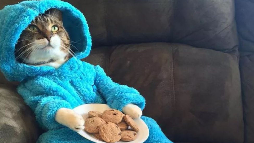 US embassy in Australia apologises for Cookie Monster cat email